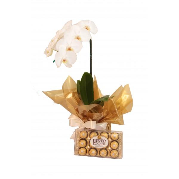 Orquídea phalaenopsis com chocolate ferrero rocher