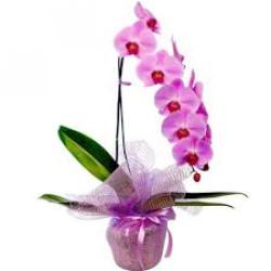 orquidea  phalaenopsis cascata cor de rosa  em tela